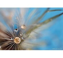 Dandelion delight Photographic Print