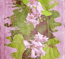 Lily of the Valley - In The Pink #3 by MotherNature