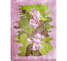 Lily of the Valley - In The Pink #3 Photographic Print