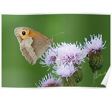 Meadow Brown Poster