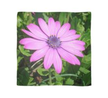 Single Pink African Daisy Against Green Foliage Scarf