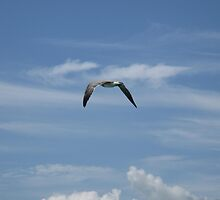 Seagull flying over Tampa Bay by JessieT