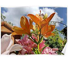 Orange Lily & Blue Sky Poster