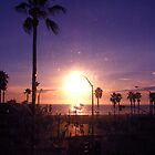 California - Palm Tree by crhodesdesign