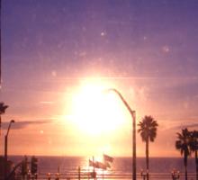 California - Palm Tree Sticker