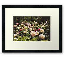Rosey Patches Framed Print