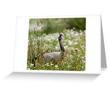 White-naped Crane Greeting Card