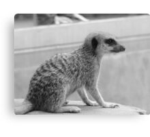 little cutie Canvas Print