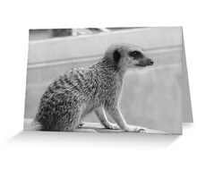 little cutie Greeting Card