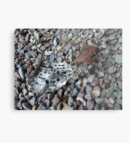 BEACH PEBBLES AND ASPEN BARK - GLACIER NATIONAL PARK Metal Print