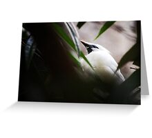 DC Zoo | Nature Greeting Card