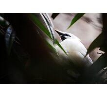 DC Zoo | Nature Photographic Print