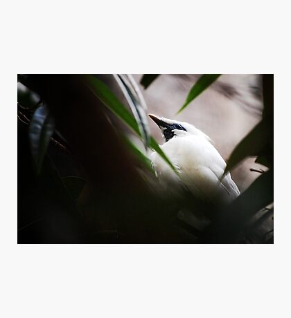 DC Zoo | Nature Photographic Print