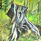 Old Stump by cmnathan