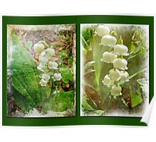 Lily of the Valley - Duet in White Poster