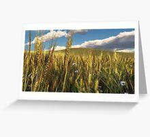Wheatfield Greeting Card