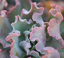 Macro shot of succulent plant by Terry Rodger Smith