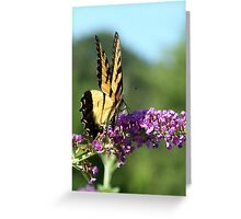 Tiger Swallowtail on Butterfly Bush Greeting Card