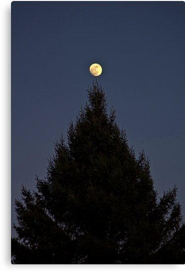 Tree Topper by Bill  Watson