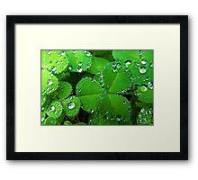Crystal Clovers Framed Print