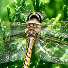 Dragonfly Une by tobeandtohave