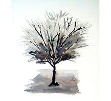 Solo Tree - Monochrome Photographic Print