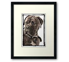 """""""Hank"""" Framed Print"""