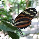 In a Butterfly Garden by welchko