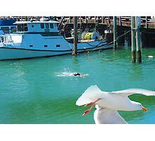 Seal and the Gull Photographic Print