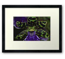 Zygopetalum Orchid Macro Framed Print