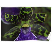 Zygopetalum Orchid Macro Poster