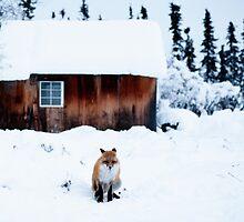 Fox by Tanasha