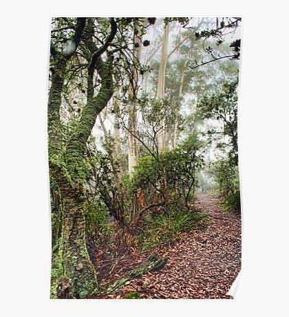 Misty Mountain Bush Track Poster