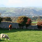 View to The Hoad - Ulverston by Marilyn Harris
