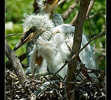 Two Chicks - - Posters & More by Maria A. Barnowl