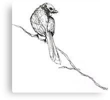 dead sparrow a Canvas Print