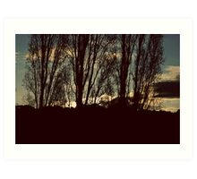 Poplar sky Art Print