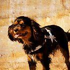 Furry Little Friend by reflector