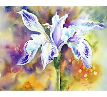 Pond Iris Photographic Print