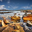 Shells by hebrideslight