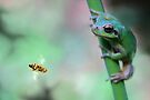 Fly trap by jimmy hoffman