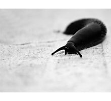 Putting the feelers out... Photographic Print