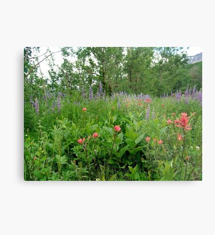 Lupines, Indian Paintbrush and Aspens Metal Print
