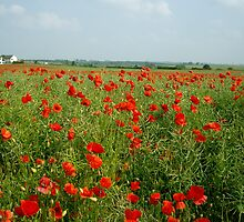 Poppy Field by crhodesdesign