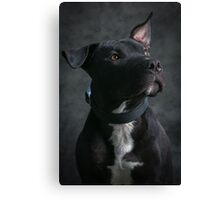 Can I have my treat now Canvas Print