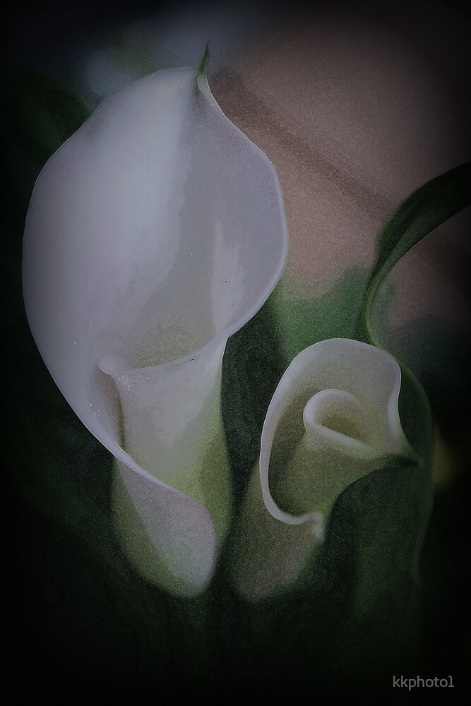 Calla Lilies by kkphoto1