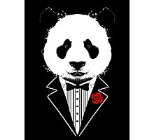 Tuxedo Panda Photographic Print