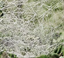 Deadly Web Bed by LadyEloise