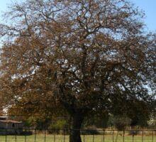 lone tree in autumn Sticker