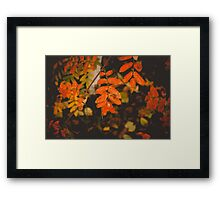 Autumn Tree Branches Framed Print